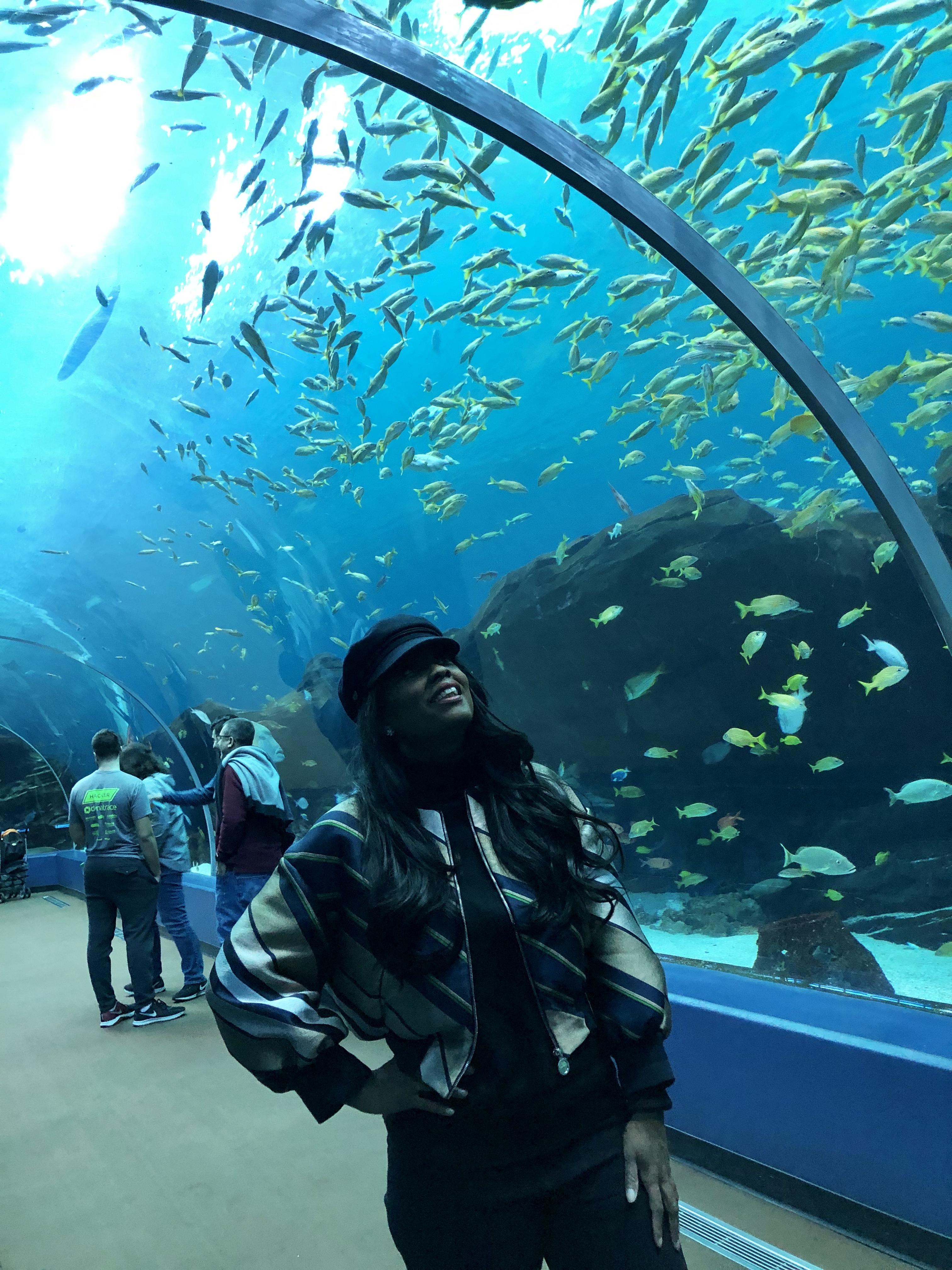 Five Reasons To Visit The Georgia Aquarium
