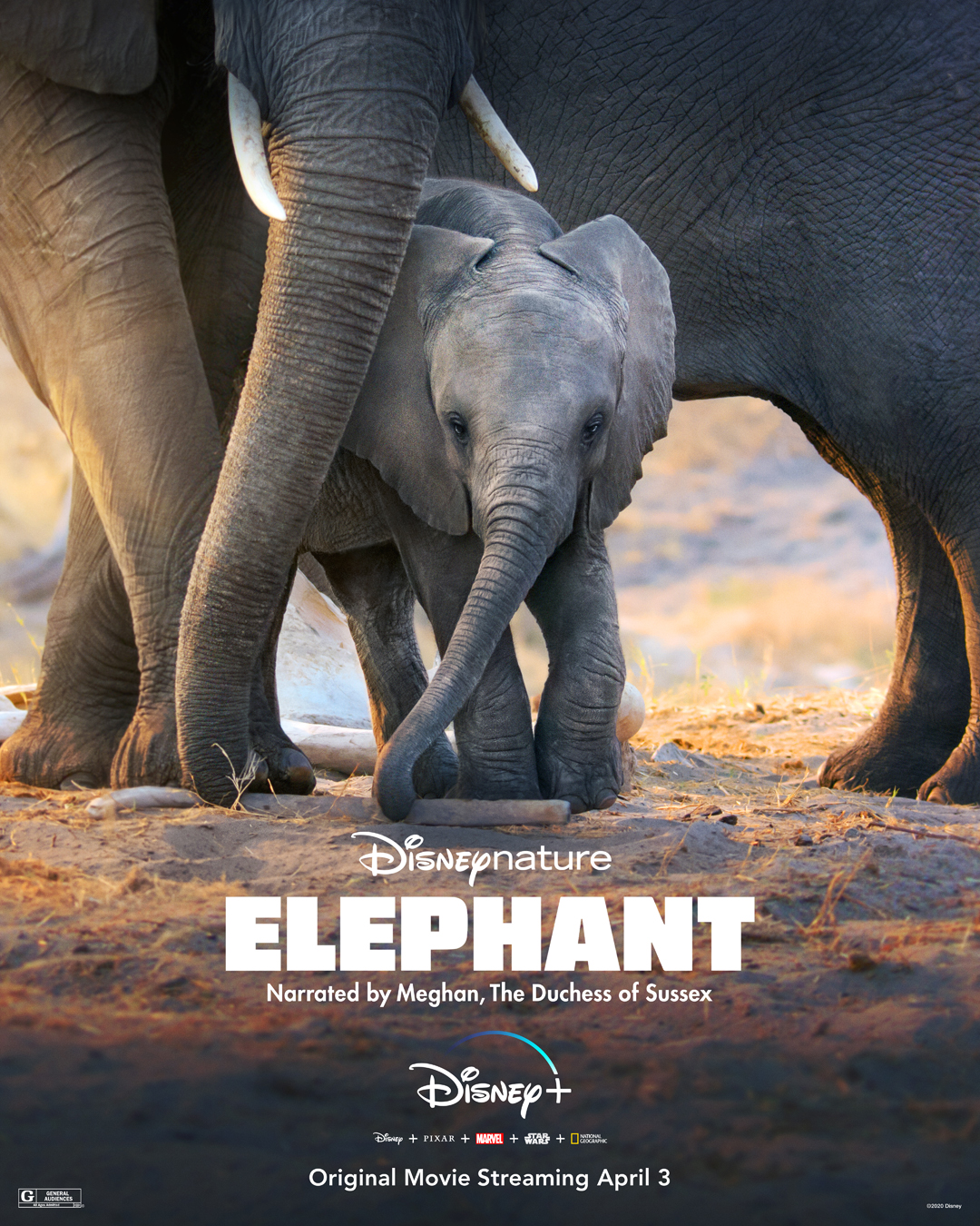 Disney + Honors Earth Month With New DisneyNature Films Narrated By Meghan Markle