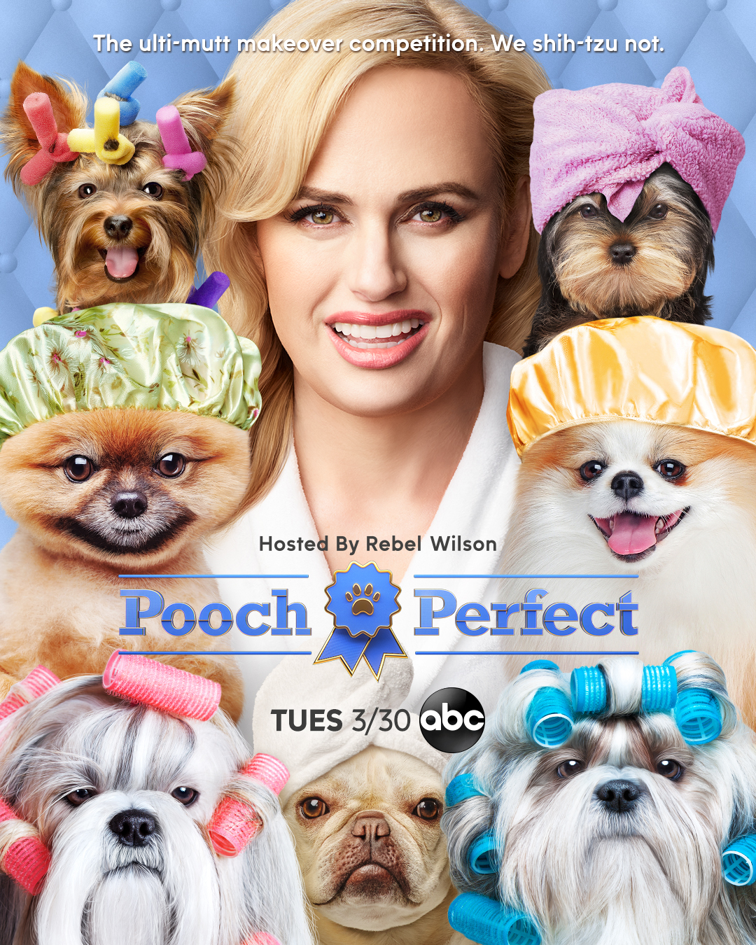 'Pooch Perfect' Dog Grooming Competition