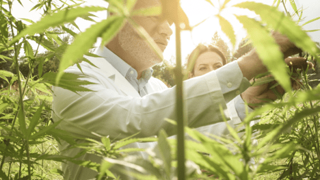 Is Cannabis The Right Choice For You?